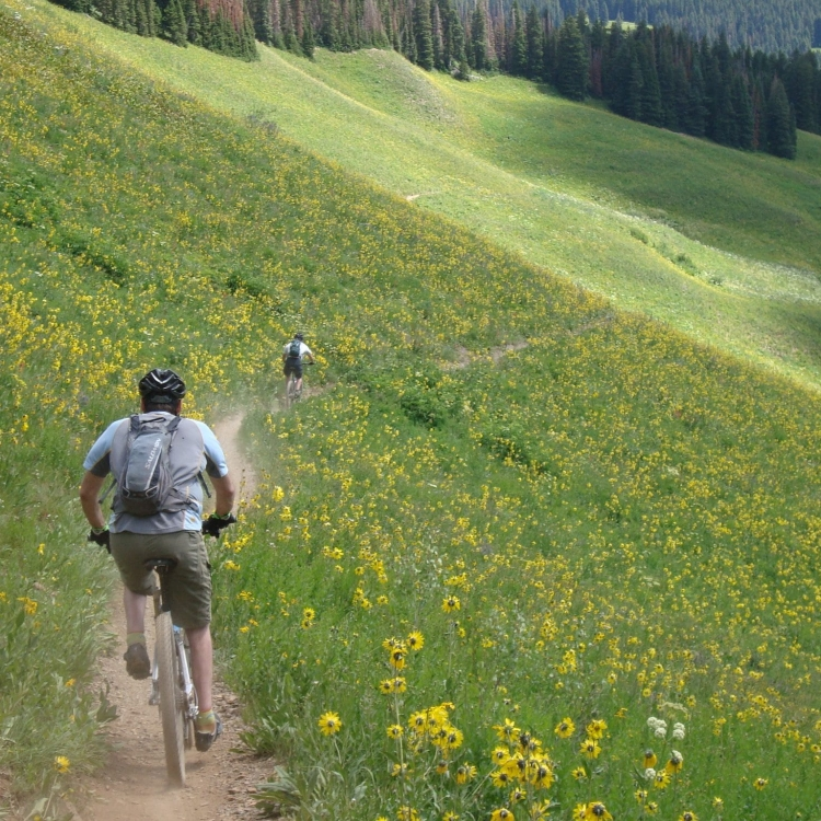 concretepete mountain bike crested butte